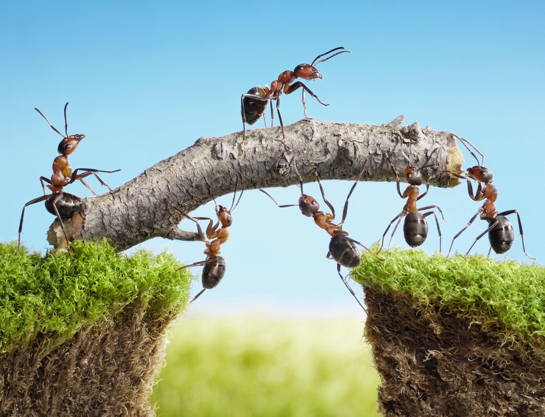 Dé Oplossing Voor Echt Samenwerken: Van Weerstand Naar Nieuwsgierigheid!